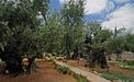 Garten Gethsemane