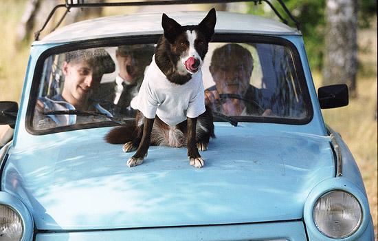 Hund Sammy Davies Jr. Jr. ist zwar verhaltensgestört, ersetzt aber die Augen des Fahrers. (alle Fotos dieser Seite: © ZDF und Neil Davidson)