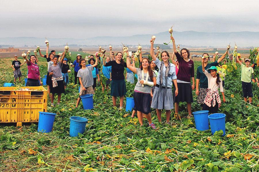 40.000 freiwillige Erntehelfer sorgen pro Jahr mit dafür, dass 60.000 Bedürftige in Israel mit Lebensmitteln versorgt werden können. (© Leket Israel)
