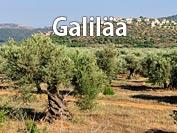Hotel Galiläa