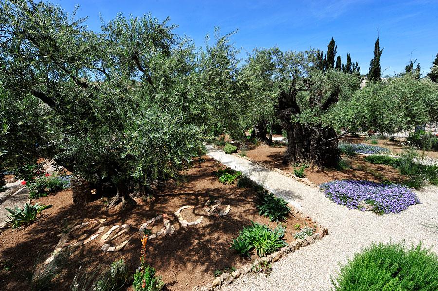Garten Gethsemane in Jerusalem.