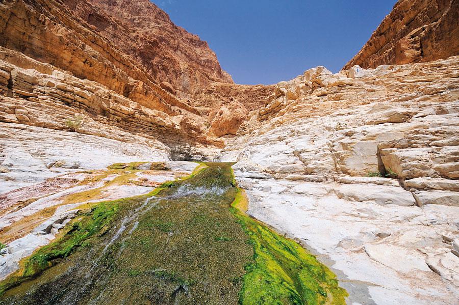 Im Wadi David wechseln sich schroffe Felsen mit dem Nass eines Wasserlaufes ab. (© Matthias Hinrichsen)