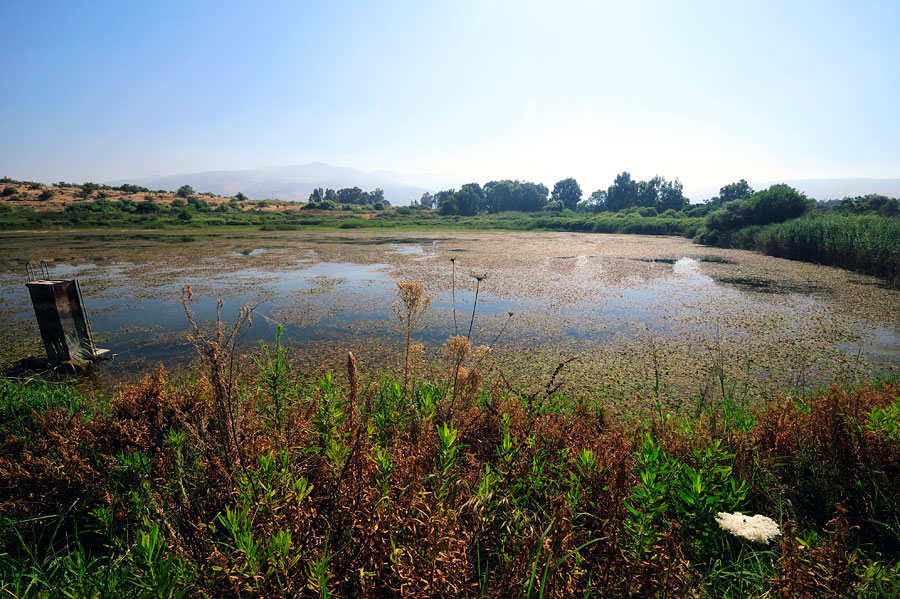 Das Snir Naturreservat ist wenig besucht, so kann der Besucher pure Natur genießen, wie dieses Biotop. (© Matthias Hinrichsen)