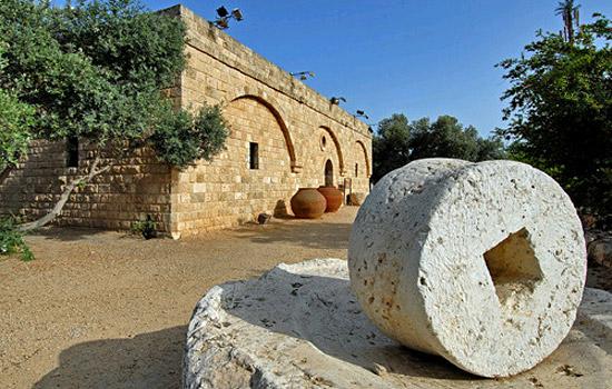 Im Garten des Eretz Israel Museums. (Foto: Israelisches Tourismusministerim)
