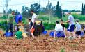 Ernten für die Armen