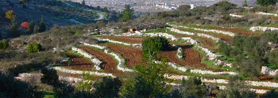 Terrassenförmig angelegte Felder im biblischen Landschaftspark Neot Kedumim nach historischem Vorbild. (© Neot Kedumim)