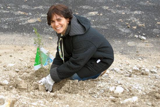 Millionen von Bäumen sind auf diese Weise schon gepflanzt worden und karge Wüstenlandschaften in schattenspendende Erholungsregionen verwandelt worden. (© JNF-KKL)