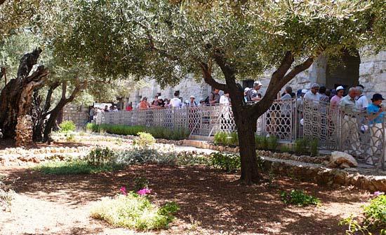 Gemeinsam als Gruppe im Garten Gethsemane an Jesus denken. (© Matthias Hinrichsen)
