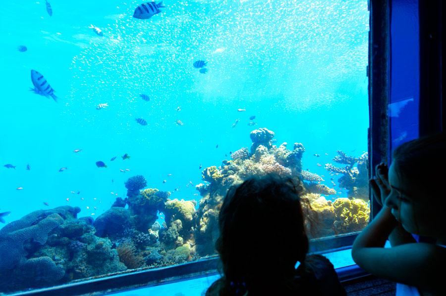 Unterwasser-Observatorium Eilat