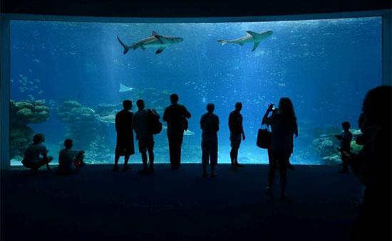 Besucher von Sharks World werden durch einen Tunnel am Beckenboden durch die Anlage geführt und können an großen Schaufenstern die Haie bewundern. (© Coralworld)