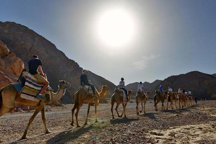 Ein Erkundung der Wüsten Israels auf einem Kamelrücken ist eine ganz besonders intensive Erfahrung. (© Camel Ranch Eilat)