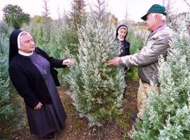 Arizona-Zypressen dienen als Weihnachtsbäume. (© Joe Malcom/KKL-JNF)