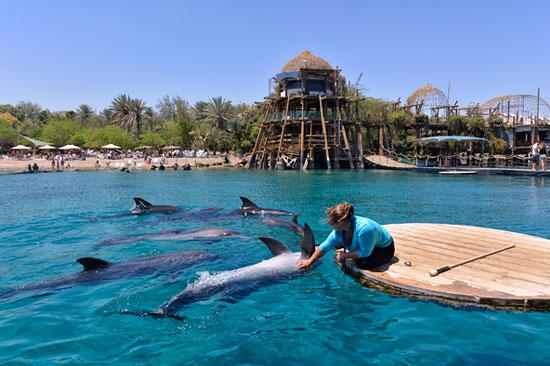 """Das Delphinressort """"Dolphin Reef"""" bietet Delphinen eine geschützte Heimat unter ökologischen Bedingungen. (© Matthias Hinrichsen)"""