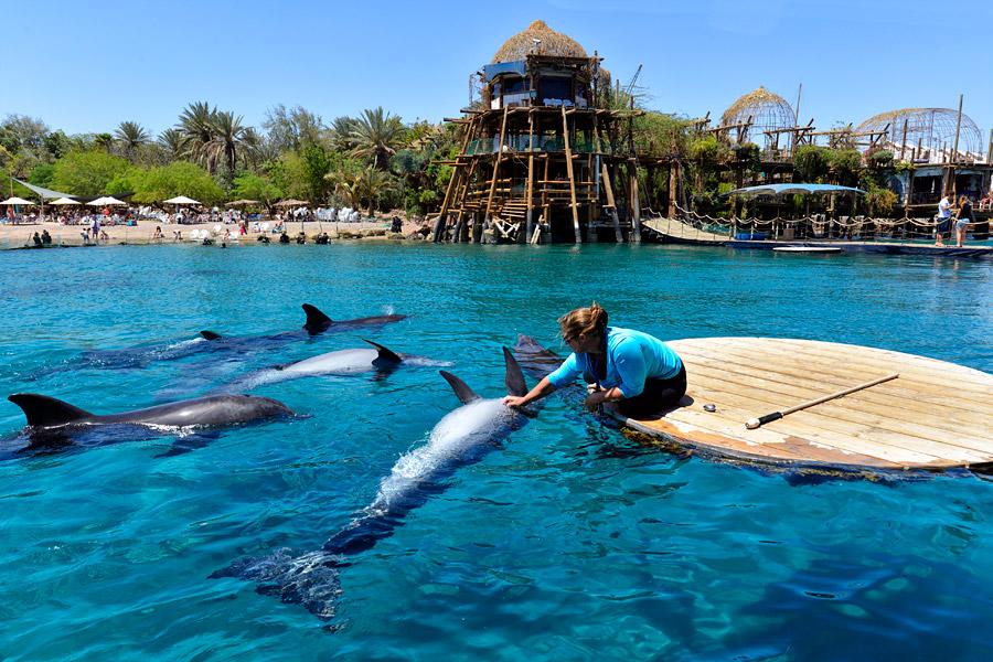 Ein Delphintrainerin beim Spielen mit Delphinen. (Foto: MMatthias Hinrichsen)