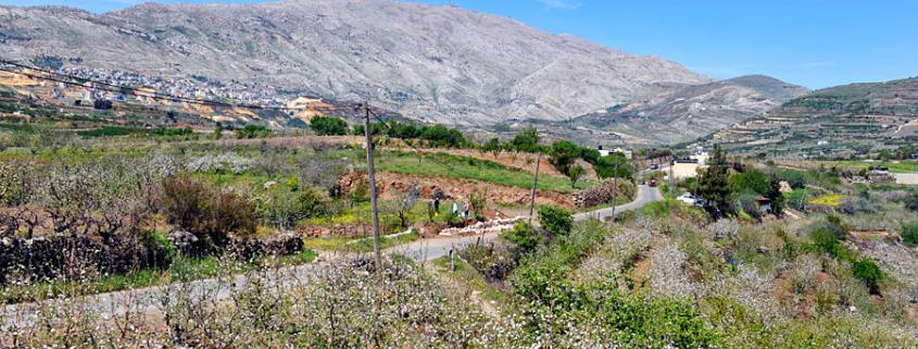 Der Golan ist reich an Landwirtschaft. (© Matthias Hinrichsen)