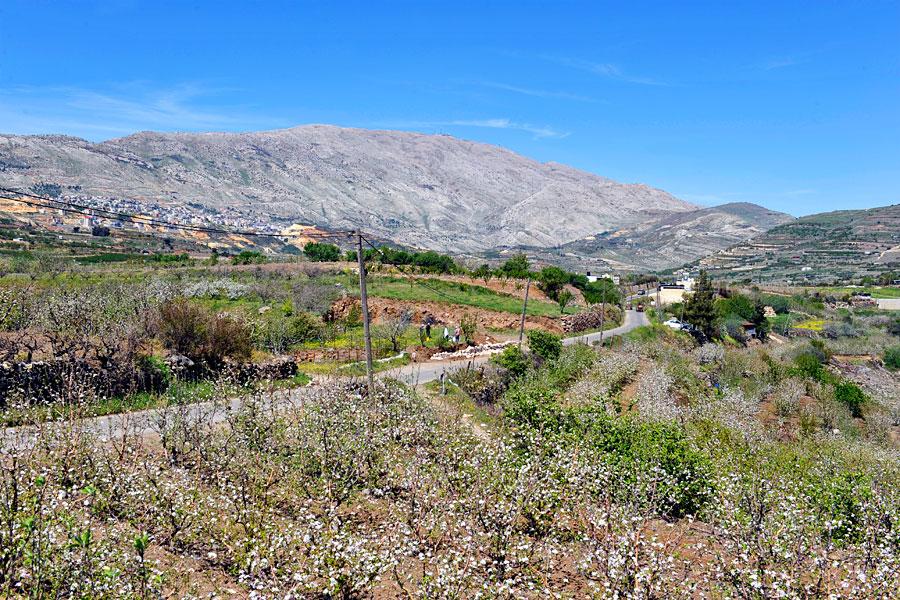 Der Golan ist reich an Landwirtschaft.