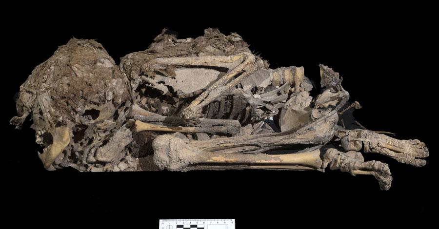 6.000 Jahre altes Skelett eines Mädchens oder eines Jungen, der in Stoff eingewickelt begraben wurde.