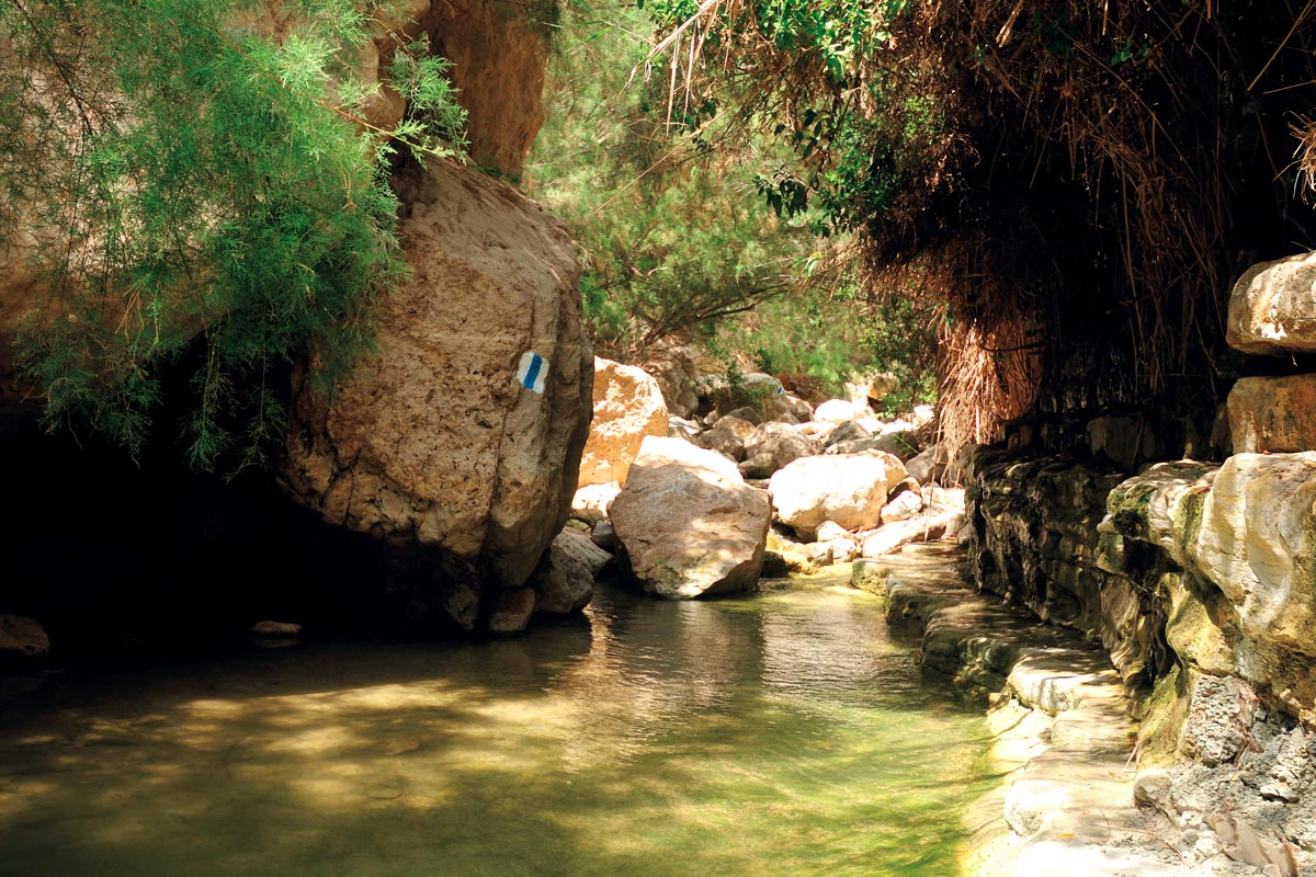 En Gedi Wadi Arugot