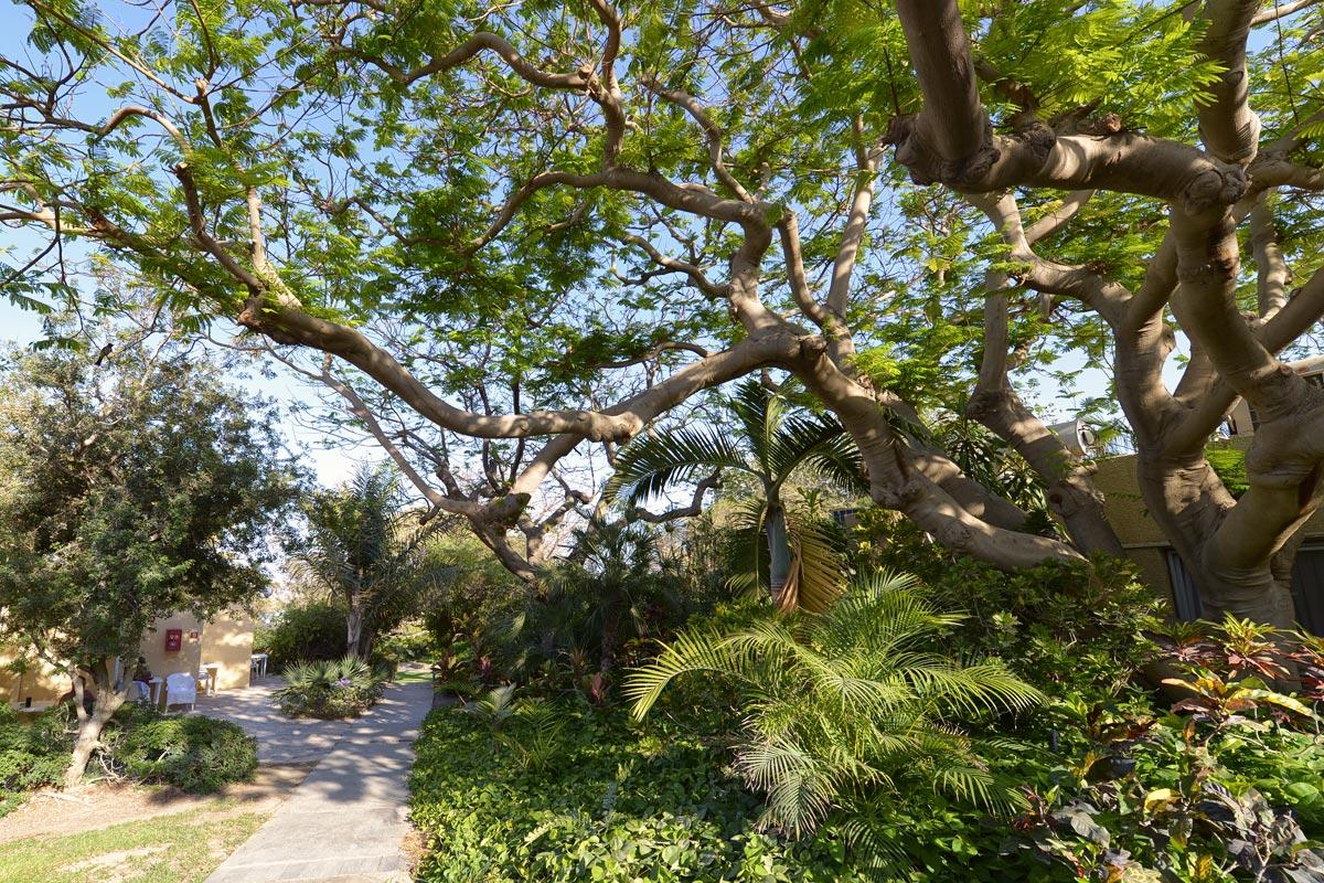 Kibbutz En Gedi Botanischer Garten