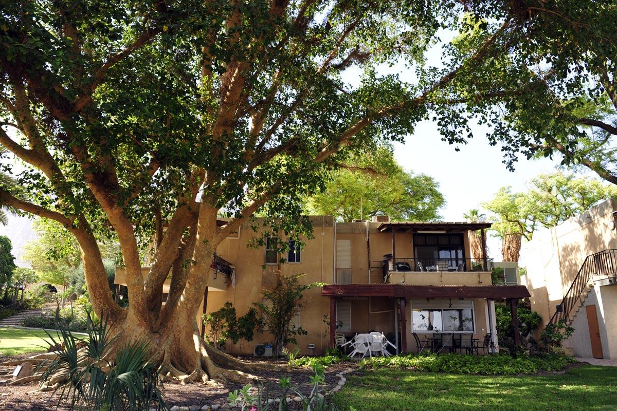 Die Häuser im Kibbutz En Gedi werden überragt von der Natur.