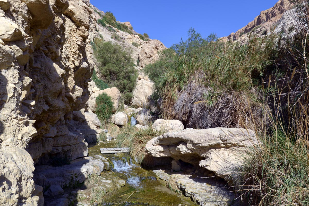 En Gedi - Wadi David