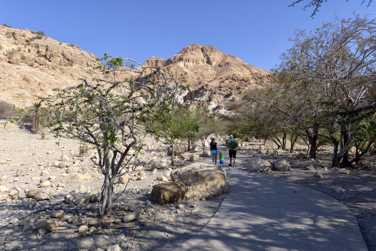En Gedi - Wadi David: Beginn des Aufstiegs